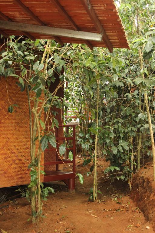 T6 Cottages in Munnar