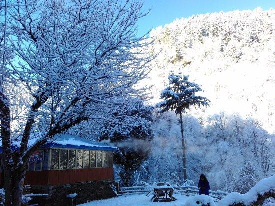 Wayward In homestay in Jibhi