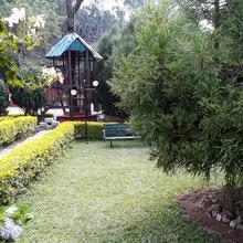 Golden Green in Suryanelli