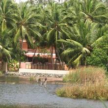 Golden Turtles in Thiruvananthapuram