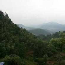 maple view resorts in Bikketti