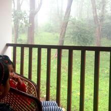 Wild Window in Vandanmedu