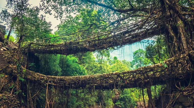 Cherrapunjee- best places to visit in India