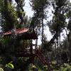 Abbydhama Estate Stay in coorg