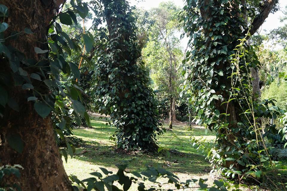 Coorg O Farm in Virajpet