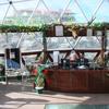 Mint Tarika Resort in Chail