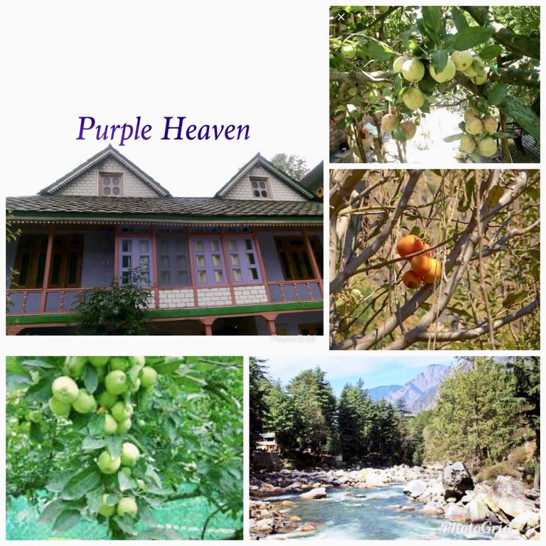 Purple Heaven in Kasol