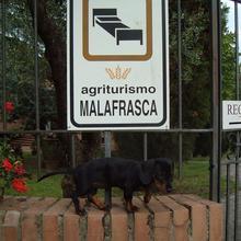 Agriturismo Malafrasca in Rosennano
