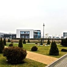 Amaryllis in Kostrzyn