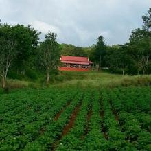 Ambuja Farms -Bandipur in Madumalai