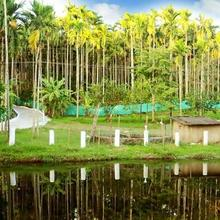 Anekad Jungle Stay Resort in Coorg