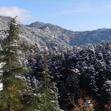 Anurag Homestay in Shimla