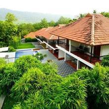 Athirapilly Green Trees in Athirappalli