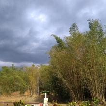 Bamboo garden villa in Panamaram
