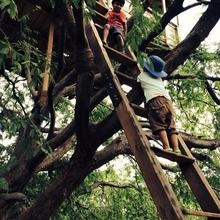 Bamboo Rustles in Chittoor