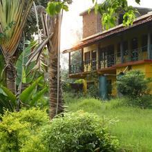 Bandhavgarh 365 in Tala