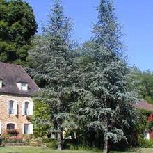 Bed & Breakfast Le Moulin Neuf in Journiac