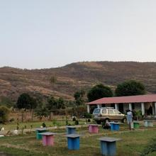 Chinkara Ranthambore in Sawai Madhopur