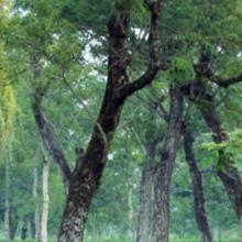 Chowkidinghee Heritage Chang Bungalow in Mohanbari