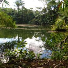 Colo-i-suva Rainforest Eco Resort in Suva