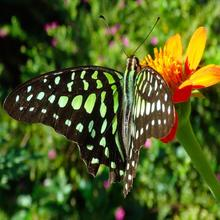 Dream Butterfly Garden Boutique Villa in Siemreab