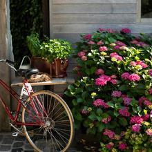 Flemish Cottage in Bruges