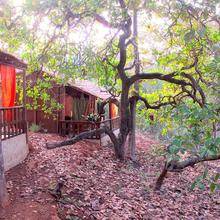 Galaxy Jungle Huts in Agonda