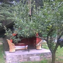 Greenhouse camps in Kasol