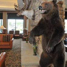 Hilton Garden Inn Anchorage in Anchorage