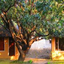 Jungle Paradise Hotel in Ramnagar