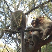 Kuruva Island Bamboo Forest Resort in Kabini