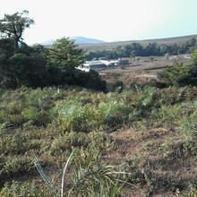 Kyathanamakki Homestay in Kalasa