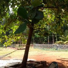 Malavani Mejvani Homestay in Chaoka