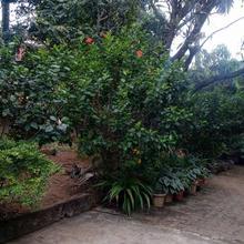 Nisarga Homestay in Mangalore