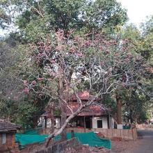 Revandi Home Stay in Tarkarli