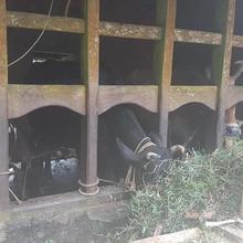 Siby's Farmstay in Todupulai