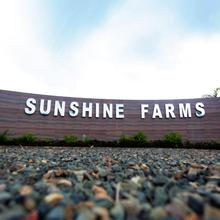 Sunshine Farms And Resort in Shillong