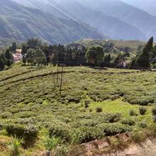 Tea View Homestay in Darjeeling