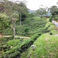 Tea Village Home Stay in Mirik
