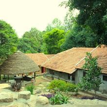 The Last Shola in Bommidi