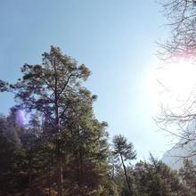 Trippy For'rest in Kasol