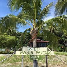 Wild Pasir Panjang in Langkawi