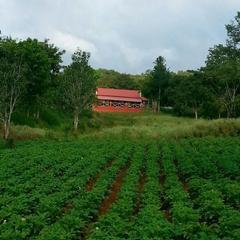 Ambuja Farms -Bandipur in Bandipur