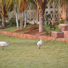 Anand Agro Tourism in Alibag
