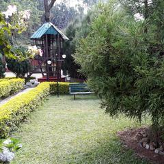 Golden Green in Munnar