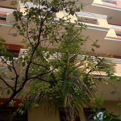 Hotel Redox in Noida