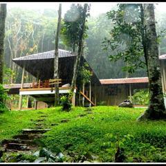 Lanternstay Jungle Resort in Meppadi