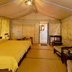 Lion Safari Camp in Sasan Gir