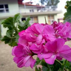 OYO 24030 Pine Winds Villa in Kasauli