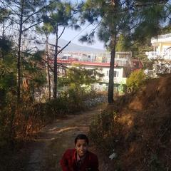 Pinewood Guest House in Solan